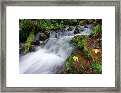 Oregon Cascade Framed Print by Jonathan Davison