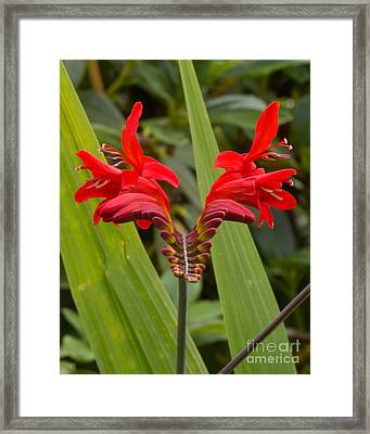 Oregon Flower 1 Framed Print
