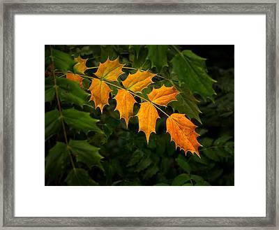 Oregon Grape Autumn Framed Print