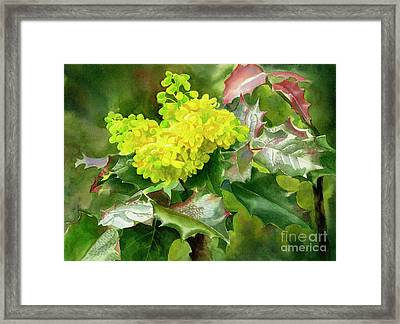 Oregon Grape Blossoms With Leaves Framed Print