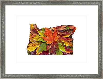 Oregon Maple Leaves Mixed Fall Colors Background Framed Print
