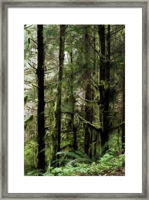 Oregon Old Growth Coastal Forest Framed Print