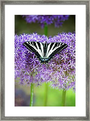 Framed Print featuring the photograph Oregon Swallowtail by Bonnie Bruno