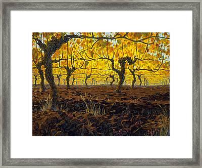 Oregon Vineyard Golden Vines Framed Print by Michael Orwick