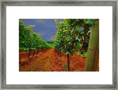 Oregon Vineyard Framed Print by Jeff Burgess