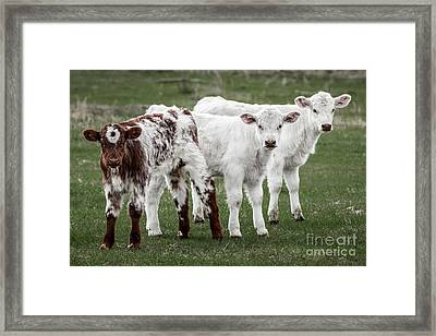 Oreo And The Twins Framed Print
