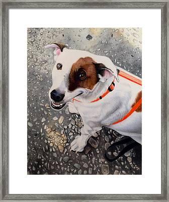 Oreo Framed Print