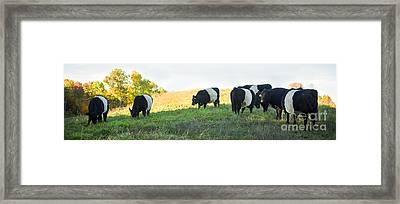 Oreos - Milk Included Framed Print by Carol Lynn Coronios