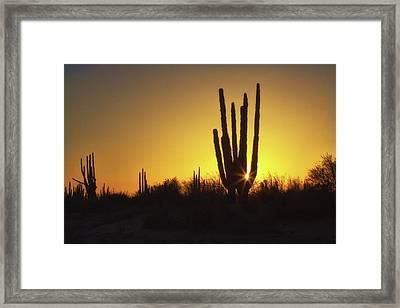 Organ Pipe Cactus Framed Print