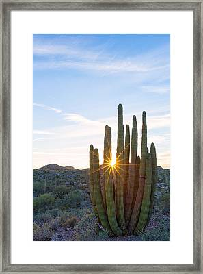 Framed Print featuring the photograph Organ Pipe Cactus by Patricia Davidson