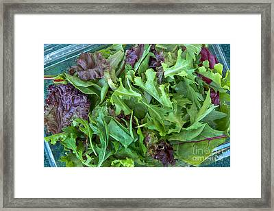 Organic Baby Lettuce Salad Mix Framed Print by Inga Spence