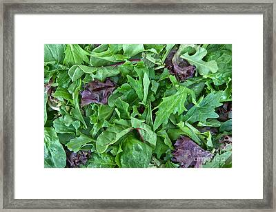 Organic Baby Lettuce Spring Mix Framed Print by Inga Spence