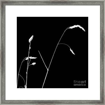 Organic Enhancements 1 Framed Print by Paul Davenport