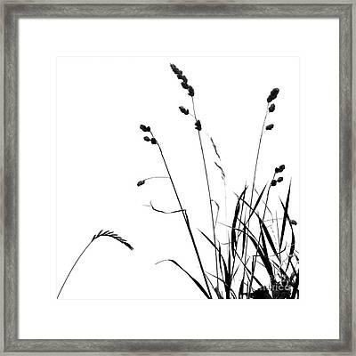 Organic Enhancements 10 Framed Print by Paul Davenport