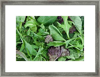 Organic Spring Mix Salad Mix Framed Print by Inga Spence