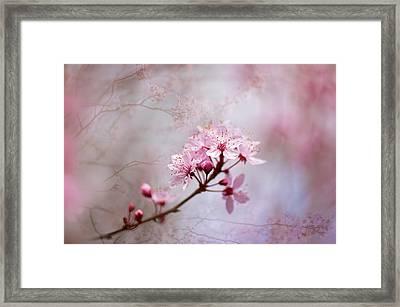 Oriental Blossom Framed Print by Jacky Parker