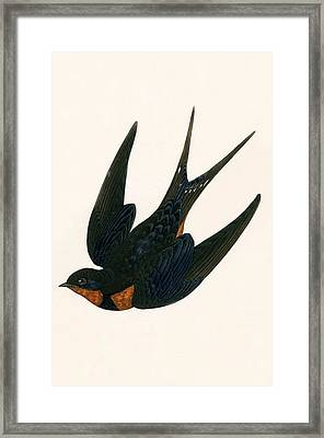 Oriental Chimney Swallow Framed Print by English School