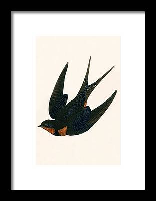Chimney Swift Framed Prints