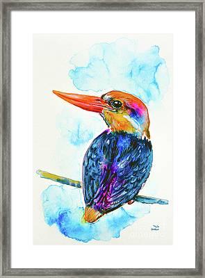 Oriental Dwarf Kingfisher Framed Print by Zaira Dzhaubaeva