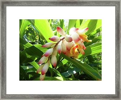 Oriental Fingervines Framed Print by Tina M Wenger