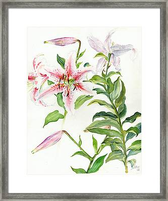 Oriental Lily Mona Lisa Liliaceae Framed Print