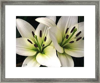 Oriental Lily Named Endless Love Framed Print by J McCombie