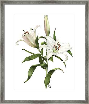 Oriental Lily Siberia Framed Print by Artellus Artworks