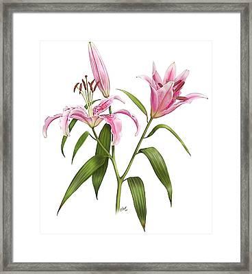 Oriental Lily Stargazer Framed Print by Artellus Artworks