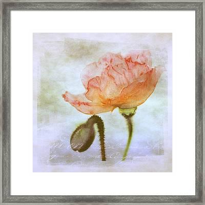 Oriental Poppy And Bud Framed Print by Julie Palencia