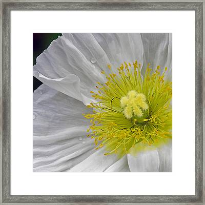Framed Print featuring the photograph Oriental Poppy by Thanh Thuy Nguyen