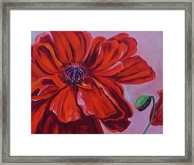 Oriental Poppy With Bud Framed Print