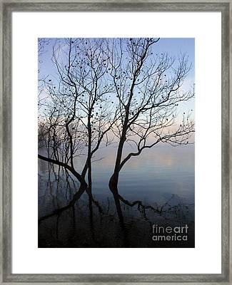 Framed Print featuring the photograph Original Dancing Tree by Paula Guttilla