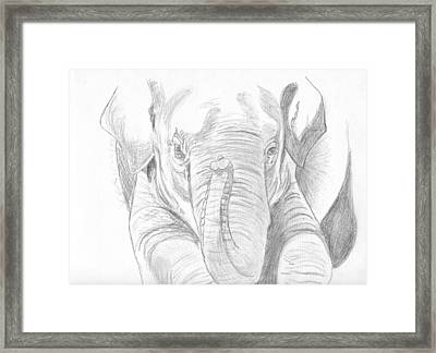 Original Pencil Sketch Elephant Framed Print by Shannon Ivins