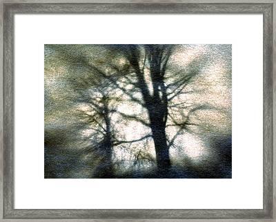Original Tree Framed Print by Diana Ludwig