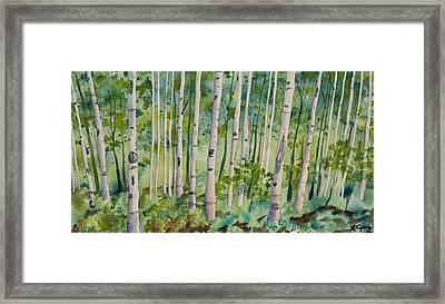 Original Watercolor - Summer Aspen Forest Framed Print