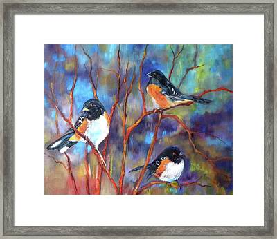 Orioles In Dogwood Framed Print by Peggy Wilson