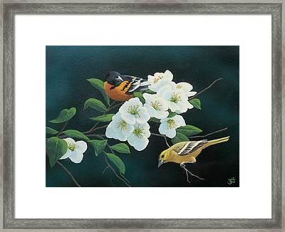 Orioles Framed Print by Mark Mittlesteadt