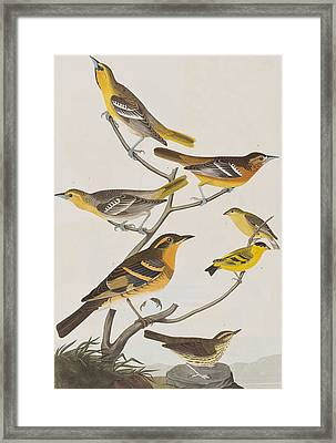 Orioles Thrushes And Goldfinches Framed Print by John James Audubon
