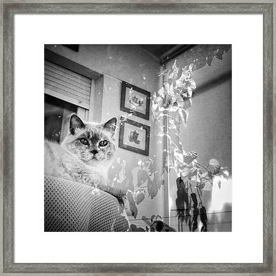 Orlando The Cat Framed Print