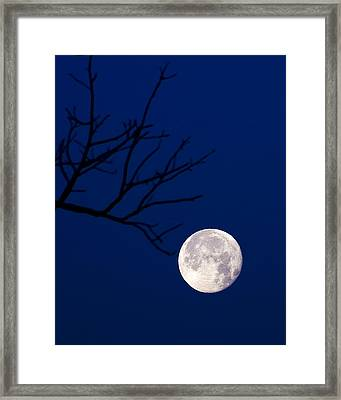 Framed Print featuring the photograph Ornament by Alan Raasch