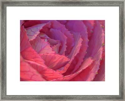 Ornamental Pink Framed Print by Roy McPeak