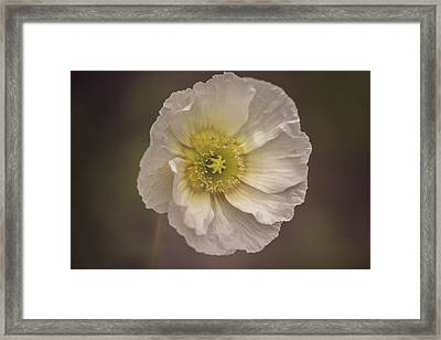 Ornamental Poppy Framed Print