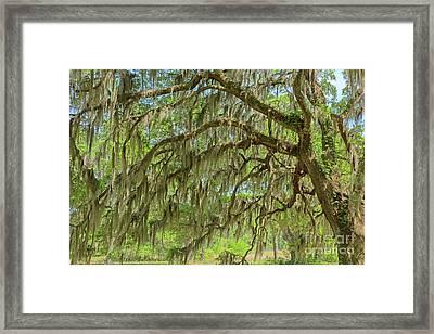 Ornamented Framed Print by Steven Dillon