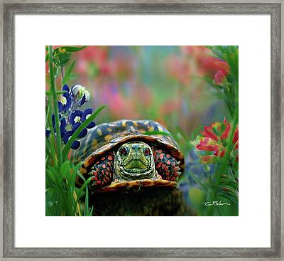 Ornate Box Turtle Framed Print