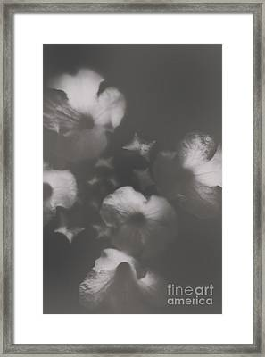 Ornate Colourless Weathered Wild Flowers Framed Print by Jorgo Photography - Wall Art Gallery