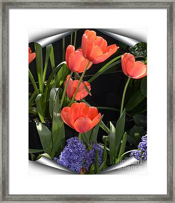 Orange And Purple Framed Print by Kathleen Struckle