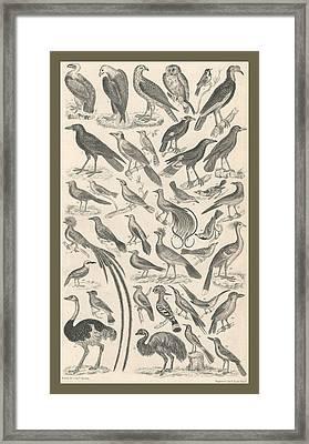 Ornithology Framed Print