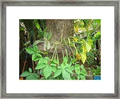 Orquidea Framed Print