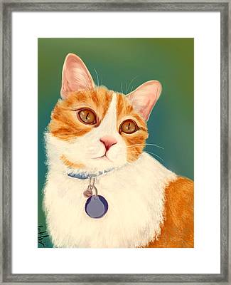 Oscar- Orange Tabby  Framed Print