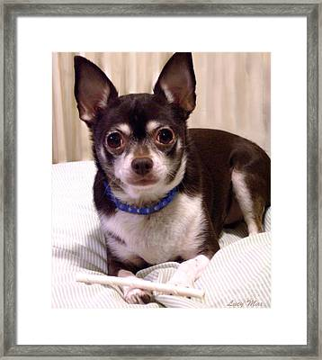 Oscar The Chihuahua Framed Print